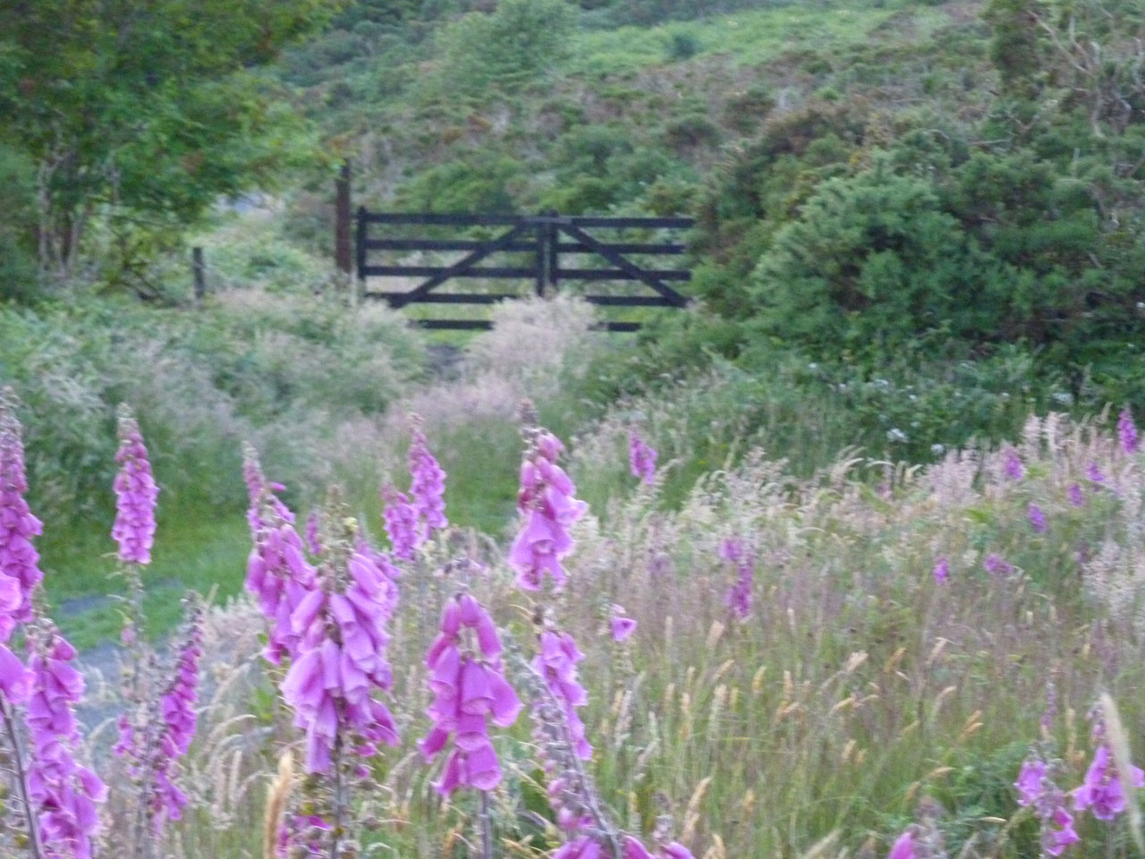 Wildflowers about at Cullintra House - ideal for nature lovers and walkers