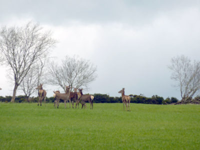 See wildlife on your doorstep at Cullintra House including a herd of wild deer