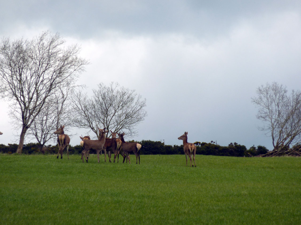 A herd of wild deer at Cullintra House - charming Farmhouse Bed & Breakfast, Co Kilkenny, Ireland